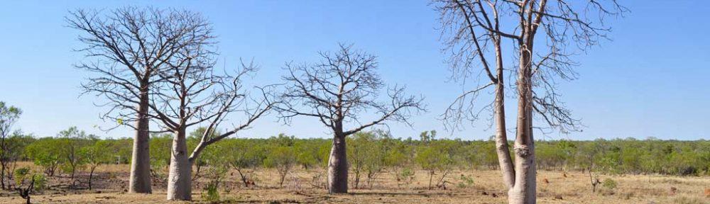 Water, Kimberley / Canning basin